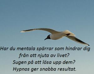 hypnos-8