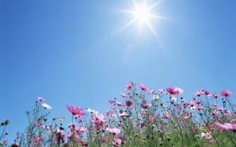 sol mot D-vitaminbrist