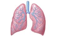 Probiotika mot  lunginflammation