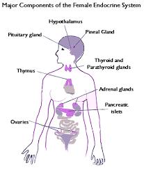 kvinnliga hormoner